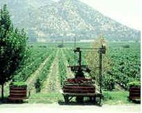 [Chili] - le vignoble chilien  CH-StaRita-vineyard2