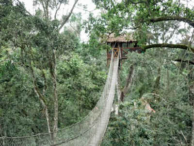 PER PEM Reserva tree house vista.jpg (81932 bytes) & Rainforest: Reserva Amazonica - Tree House